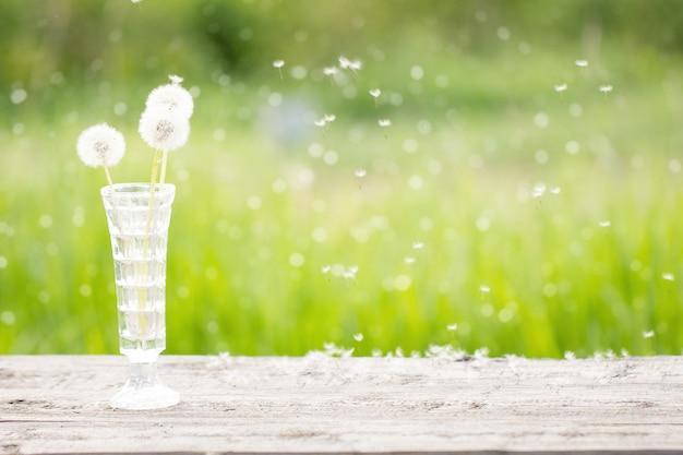 Weißer löwenzahn in einem vase auf einem holztisch, draußen Premium Fotos