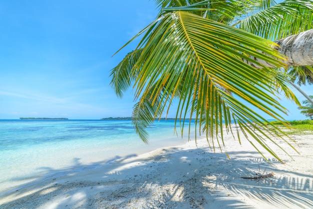 Weißer sandstrand mit korallenriff des türkisblauen wassers der kokosnusspalmen, tropisches reiseziel, wüstenstrand keine leute - banyak-inseln, sumatra, indonesien Premium Fotos