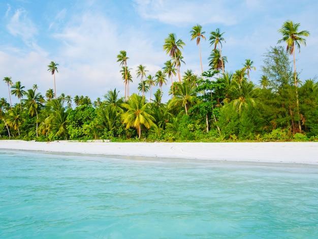 Weißer sandstrand mit transparentem wasser des kokosnusspalmen-türkises, tropisches reiseziel, wüstenstrand keine leute - kei islands, molukken, indonesien Premium Fotos
