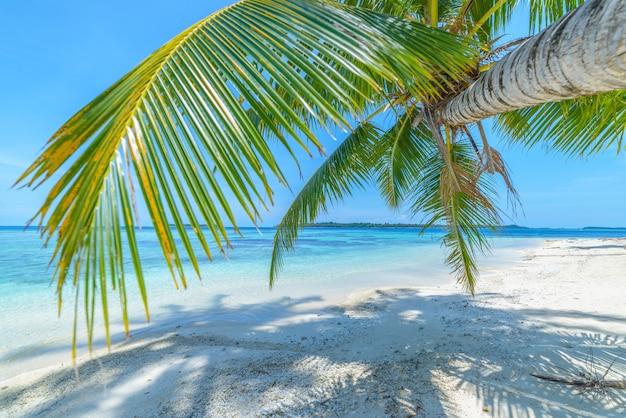 Weißer sandstrand mit tropeninsel des türkisblauen wassers der kokosnusspalmen Premium Fotos