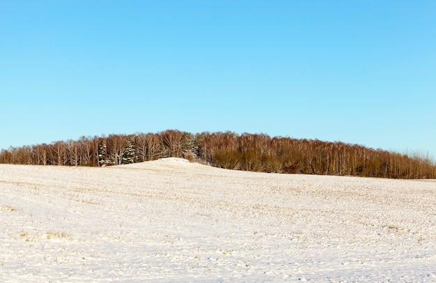 Weißer schnee, nachdem schnee gefallen war und das land auf dem landwirtschaftlichen feld bedeckt hatte, foto in der wintersaison, im schnee klebt eine große anzahl von trocken vergilbtem gras und weizenstoppeln Premium Fotos