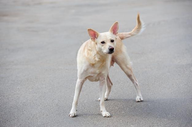 Weißer streunender hund Premium Fotos