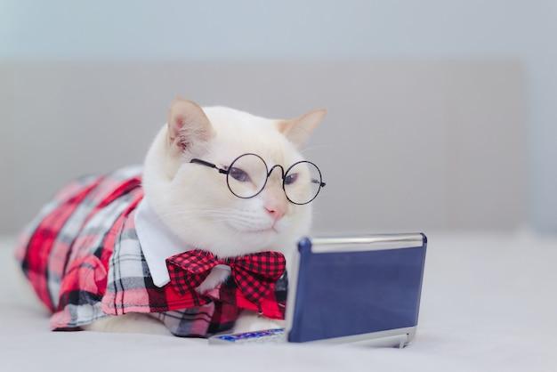 Weißes kätzchen, das auf dem bett betrachtet tablette sitzt. katze, die video im internet schaut Premium Fotos