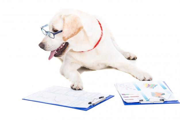 Weißes labrador mit gläsern und arbeitsdokumenten. Premium Fotos