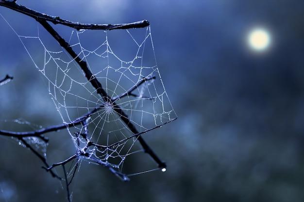 Weißes spinnennetz auf einem hintergrund eines dunklen nachthimmels Premium Fotos