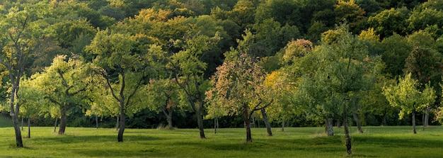 Weitwinkelaufnahme eines mit gras bedeckten feldes und voller schöner bäume, die tagsüber eingefangen wurden Kostenlose Fotos
