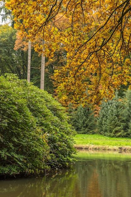 Weitwinkelaufnahme eines parks mit einem riesigen strauch und bäumen in der umgebung Kostenlose Fotos