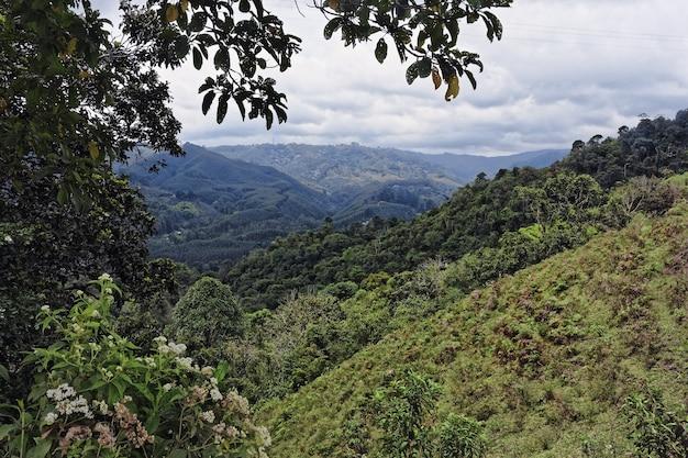 Weitwinkelaufnahme von bäumen und wäldern auf einem berg während des tages Kostenlose Fotos
