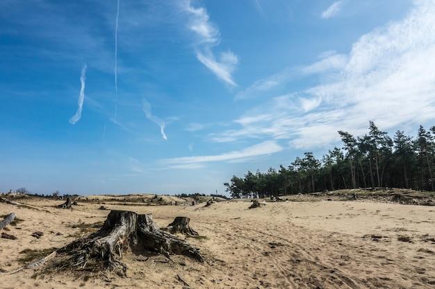 Weitwinkelaufnahme von sand vor dem wald unter einem bewölkten himmel Kostenlose Fotos