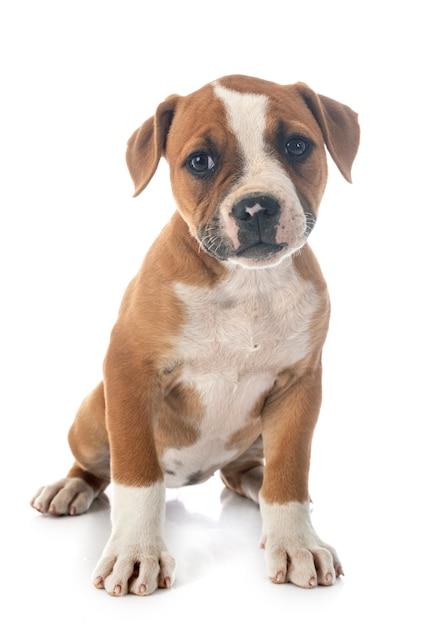 Bulldog? Bist Du Das? 8