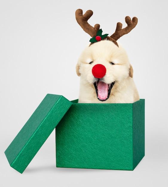 Welpe des goldenen apportierhunds in einer grünen weihnachtsgeschenkbox Kostenlose Fotos
