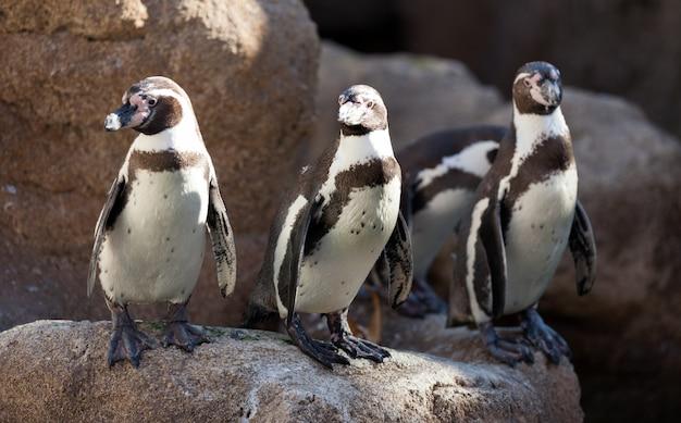 Wenige pinguine Kostenlose Fotos