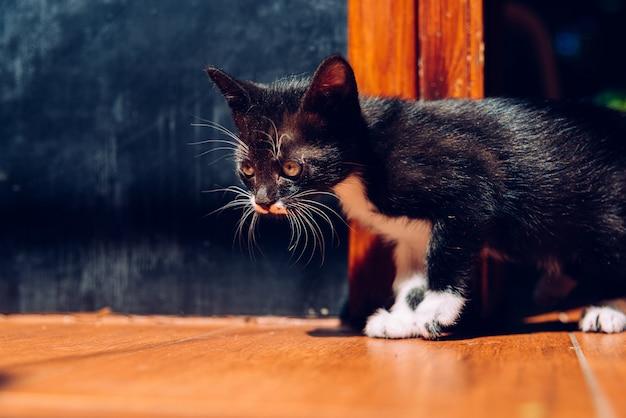 Wenn sie ein kätzchen haben, müssen sie es richtig pflegen. Premium Fotos