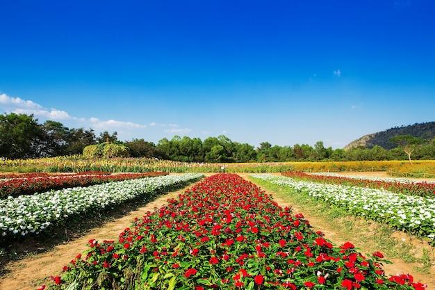 Wiese mit wildblumen in den bergen von utah gefüllt Premium Fotos