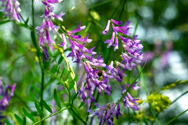 Wilde gelbe blumen mit einer biene, die blütenstaub gegen einen tiefen blauen himmel sammelt. Premium Fotos