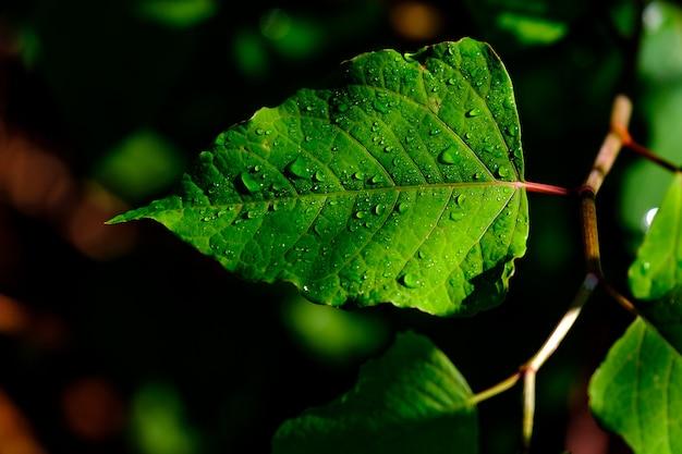 Wilde grüne blätter mit tau darauf Kostenlose Fotos