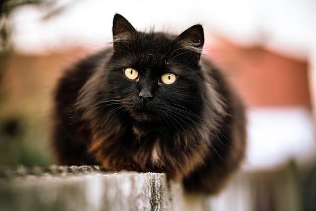 Wilde schwarze katze mit grünen augen und unscharfem hintergrund Kostenlose Fotos