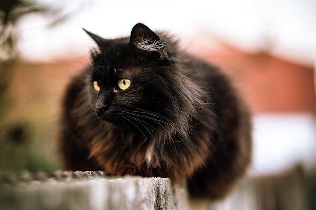 Wilde schwarze katze mit grünen augen Kostenlose Fotos