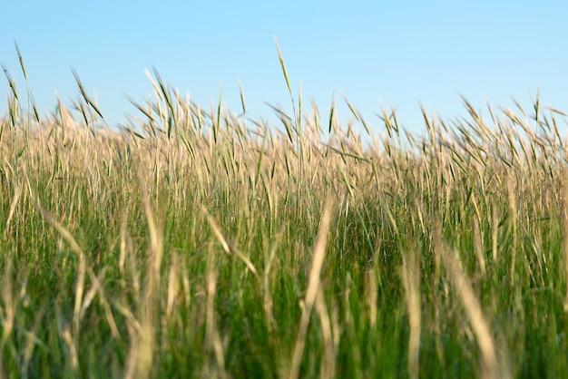 Wilde steppe an einem sommertag, region ukraine, kherson Premium Fotos