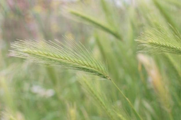 Wilder grüner spitzenhintergrund mit selektivem fokus Premium Fotos