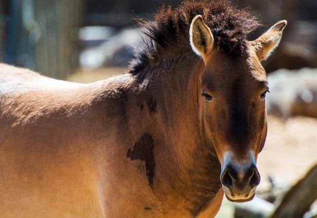 Wildes pferd nahaufnahme Kostenlose Fotos