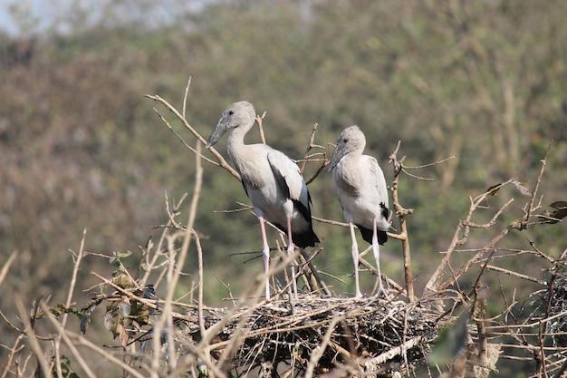 Wildvogel Premium Fotos