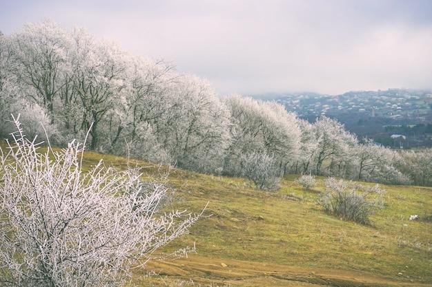 Winter außerhalb der stadt Premium Fotos