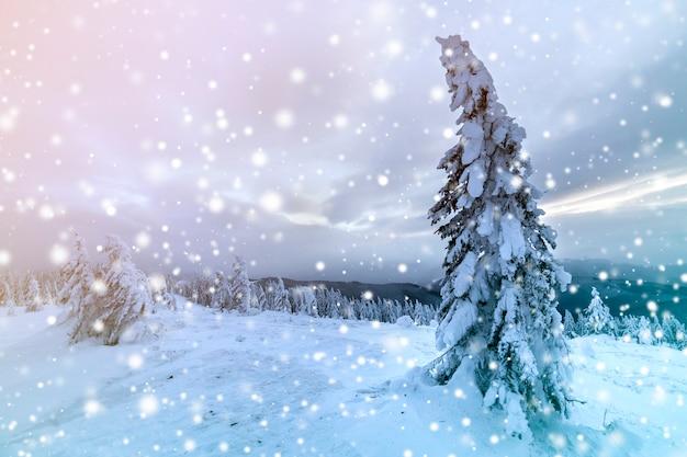 Winter blaue landschaft. gezierter baum im tiefen schnee auf gebirgsreinigung am kalten sonnigen tag auf kopienraum des bewölkten himmels. Premium Fotos