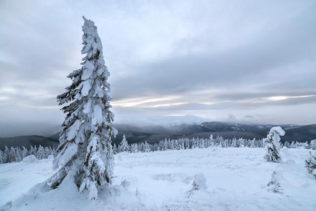 Winter blaue landschaft. gezierter baum im tiefen schnee auf gebirgsreinigung am kalten sonnigen tag auf kopienraumhintergrund des bewölkten himmels. Premium Fotos