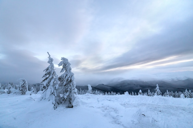 Winter blaue landschaft Premium Fotos