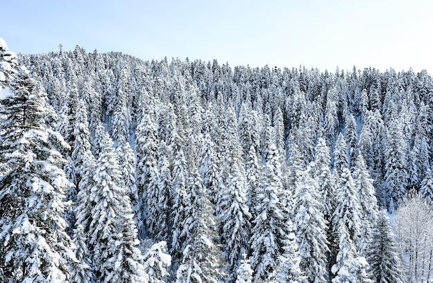Winter schneebedeckter wald in den bergen. schneebedeckte berggipfel des kaukasus in der nähe des ferienortes arkhyz. berggipfel mit schnee im winter bedeckt. winterlandschaft. Premium Fotos