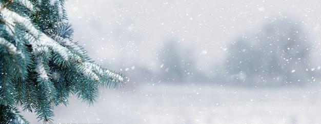 Winteransicht mit schneebedecktem fichtenzweig und verschwommenen bäumen in der ferne bei schneefall Premium Fotos