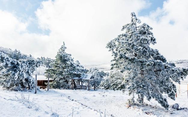Winterlandschaft auf einem berggipfel mit schneebedeckten bäumen Premium Fotos