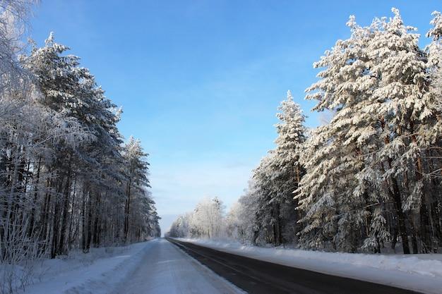 Winterlandschaft. die route führt durch wald, klarer frostiger wintertag. Premium Fotos