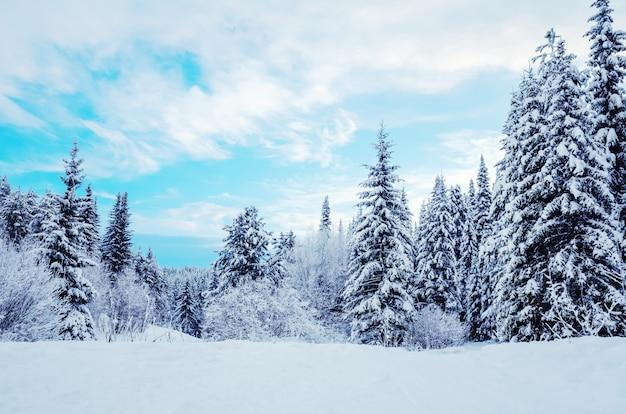 Winterlandschaft: schneebedeckte nadelbäume auf einem hintergrund des blauen himmels. Premium Fotos