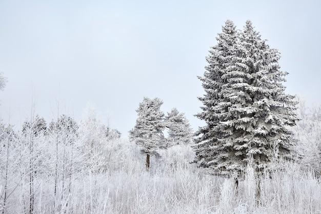 Wintermischwaldbäume bedeckt mit weißem schnee Premium Fotos