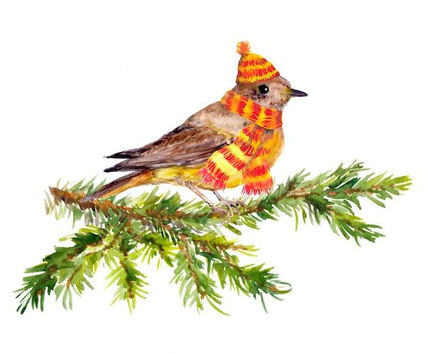 Wintervogel und -schal auf kieferniederlassung. Premium Fotos