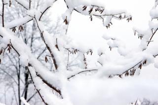 Winterwald, flora Kostenlose Fotos