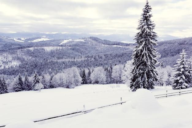 Winterwald in den bergen Premium Fotos