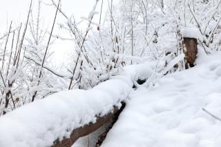 Winterwald, objekt Kostenlose Fotos