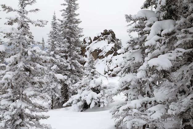 Winterwaldlandschaft mit tannenbäumen bedeckte schnee in altay mountains Premium Fotos