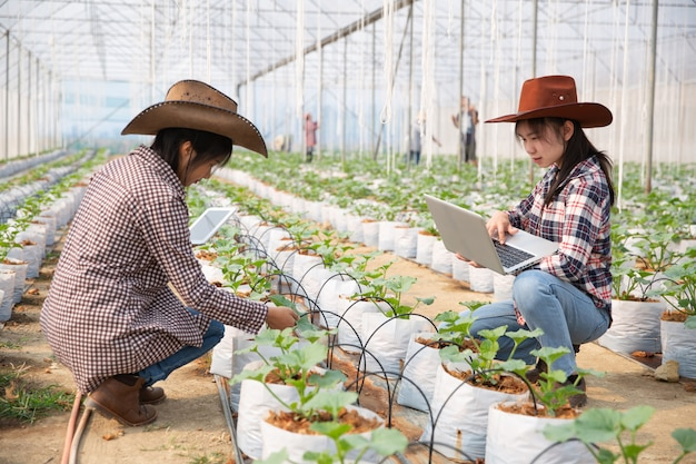 Wissenschaftliche mitarbeiterin, landwirtschaftsreferentin. im gewächshaus farm research melone Kostenlose Fotos