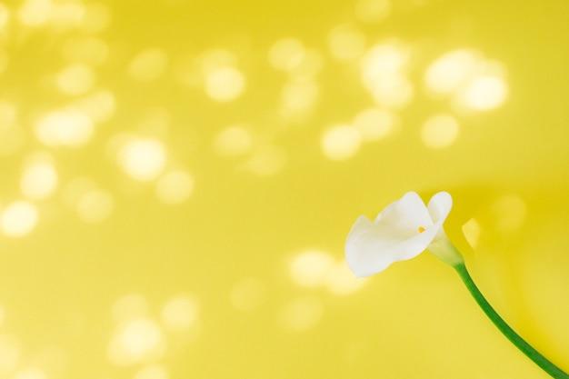 Wunderbare frische weiße blüte Kostenlose Fotos