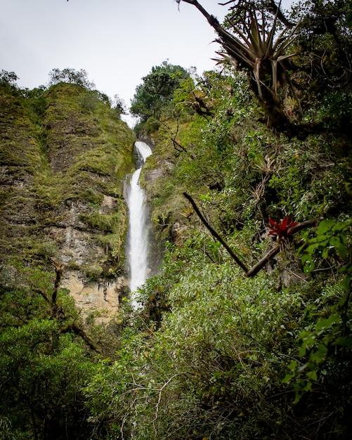Wunderschöne landschaft eines waldes mit erstaunlichen glitzernden wasserfällen Kostenlose Fotos