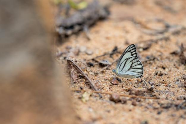Wunderschöne schmetterlinge. komm und iss mineralien. schönes muster auf schmetterlingsflügeln. Premium Fotos