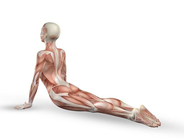 Yoga-Übung mit Muskeln | Download der kostenlosen Fotos