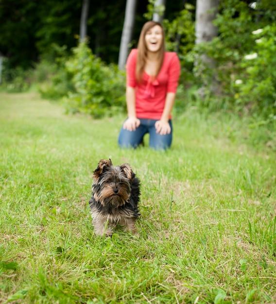 Yorkshire terrier welpe auf wiese Kostenlose Fotos