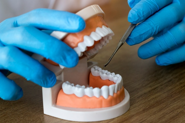 Zahnarzthände beim arbeiten an dem gebiss, den falschen zähnen, einer studie und einer tabelle mit zahnmedizinischen werkzeugen Premium Fotos