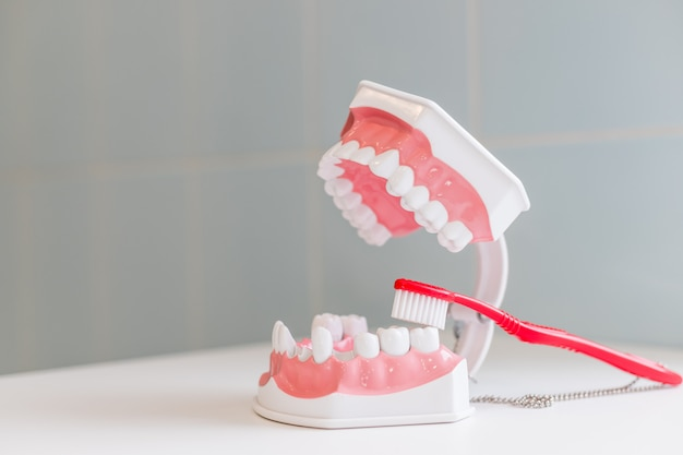 Zahnbürste und kiefer lokalisiert auf tabelle. Premium Fotos