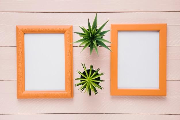 Zierpflanzen zwischen minimalistischen rahmen Kostenlose Fotos